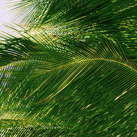 For The Love Of Palms by Roselynne Broussard