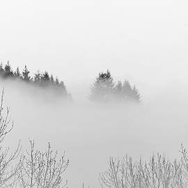Teresa A Lang - Forest Above the Fog