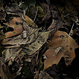 Forest Floor - Leaf 17 by Pete Hellmann