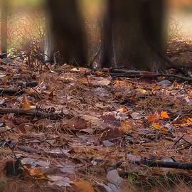 Julie Weber - Forest Floor -