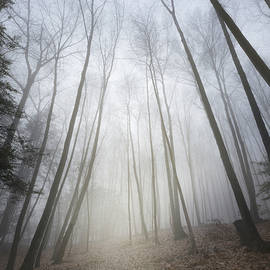 Bill Wakeley - Forest Fog