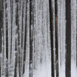 Whispering Peaks Photography - Forest Illusions- Winter