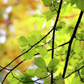 Nicholas Blackwell - Forest Light