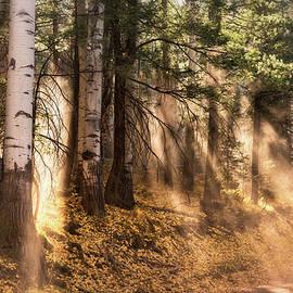 Saija Lehtonen - Forest Light