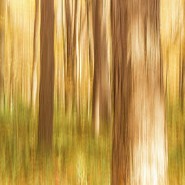 Forest Magic by Lindley Johnson