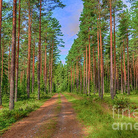 Veikko Suikkanen - Forest path 2