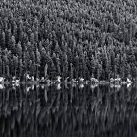 Allan Van Gasbeck - Forest Reflections Black and White