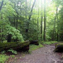 Forest Setting Smoky Mountains National Park by NaturesPix