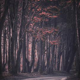 Carlos Caetano - Forest Trail