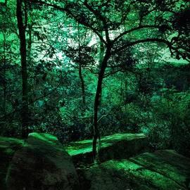 Foresta Profonda by Rachel Hannah