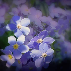 Forget me not haze