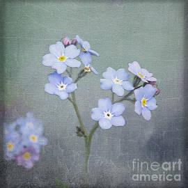 Forget Me Not by Liz Alderdice