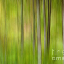 Beve Brown-Clark Photography - Forgotten Woods