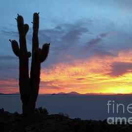 James Brunker - Forked Cactus at Sunset Salar de Uyuni Bolivia