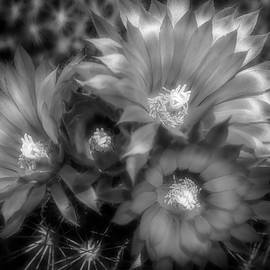 Four Blooms - Black and White by Donna Kennedy