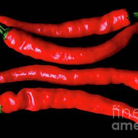 Alan Harman - Four Red Chilies