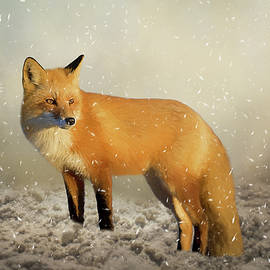 Fox In The Snowstorm - Painting by Ericamaxine Price