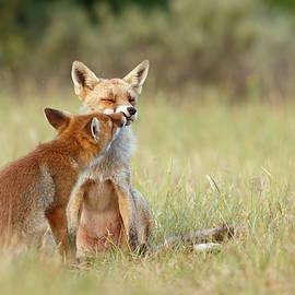 Roeselien Raimond - Fox Love Series - Kiss