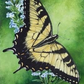 Fragile Beauty by Barbara Keith