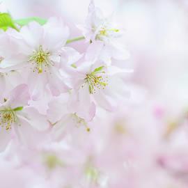 Fragile Beauty. Spring Pastels by Jenny Rainbow