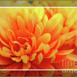Framed Floral Delight by Sandra Huston
