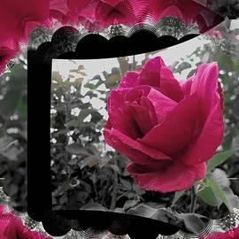 Nancy Pauling - Framed Rose