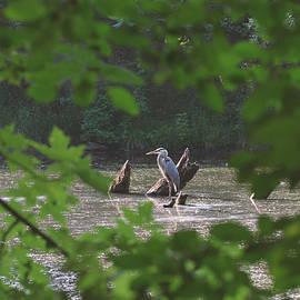 Asbed Iskedjian - Framing the heron