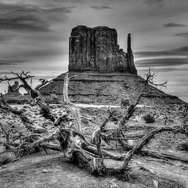 Michael Morse - Framing West Mitten Butte