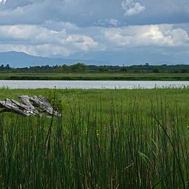 Rob Mclean - Fraser River Marshland