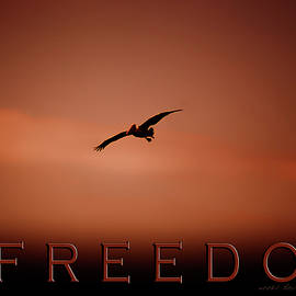 Freedom 2 by Vicki Ferrari