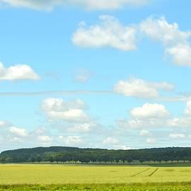 Linda Covino - French countryside
