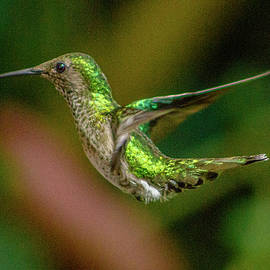 Frequent Flyer 2, Mindo Cloud Forest, Ecuador by Venetia Featherstone-Witty