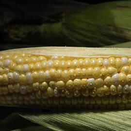 Fresh Corn - Steve Gadomski
