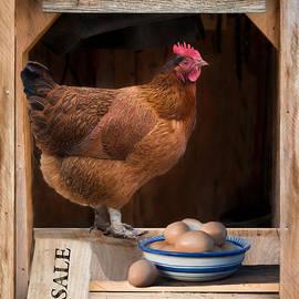 Robin-Lee Vieira - Fresh Eggs