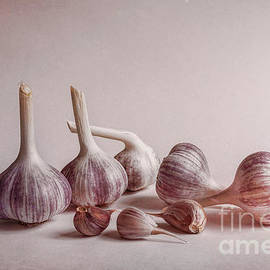 Fresh Garlic - Veikko Suikkanen