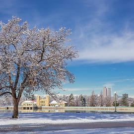 Bridget Calip - Fresh Spring Snow - City Park, Denver, Colorado