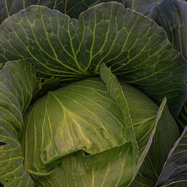 Fresh Vegetable Garden Cabbage by James BO Insogna