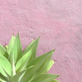 Colourspeak Kerry - Pink Delight