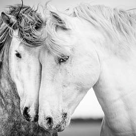Friends V by Tim Booth