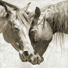 Friendship of Horses Sepia by Jennie Marie Schell