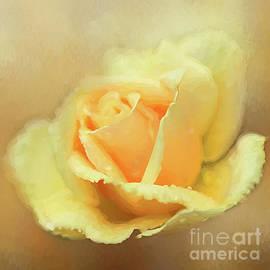 Darren Fisher - Friendship Rose