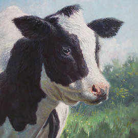 Martin Davey - Friesian Cow portrait