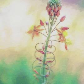 Terry Davis - Frilly Flower Impression