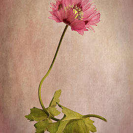 Frilly Poppy by Robert Murray