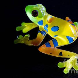 Frog Spirit by Bob Christopher
