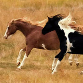 Frolicking Horses by Priscilla Burgers