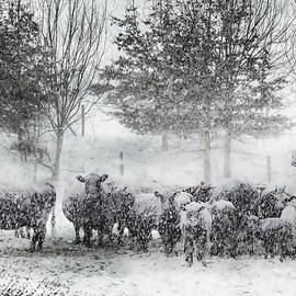 Frosted Bovines by Jim Love