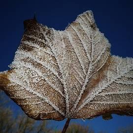 Richard Brookes - Frosty Leaf