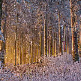 Steve Luther - Frozen Forest Glow