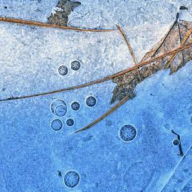 Bill Morgenstern - Frozen in Time
